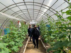 Замакима Кызылординской области ознакомился с работой аграриев