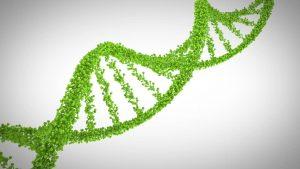 Исследование выявляет регуляторные особенности генома кукурузы