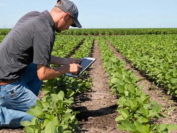 Как датчики урожая и животных делают сельское хозяйство выгодным и безопасным