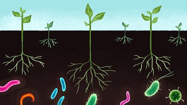 Повышение температуры может увеличить ущерб от патогенов
