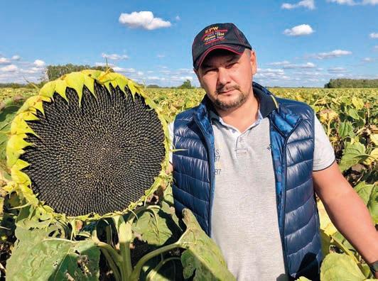 выбор семян подсолнечника 2020