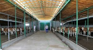 программа поддержки фермеров