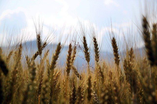 Продкорпорация приступила к заключению договоров поручения и договоров залога зерна