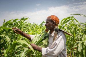 Рост мировых продовольственных цен в августе