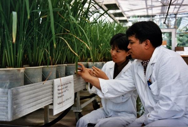 Усовершенствованные сорта сельскохозяйственных культур