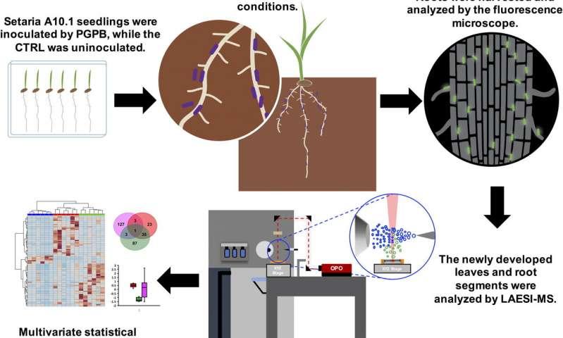 Ученые пытаются снизить зависимость сельского хозяйства от азотных удобрений