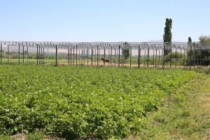 сельхоз земли в Жамбылской области