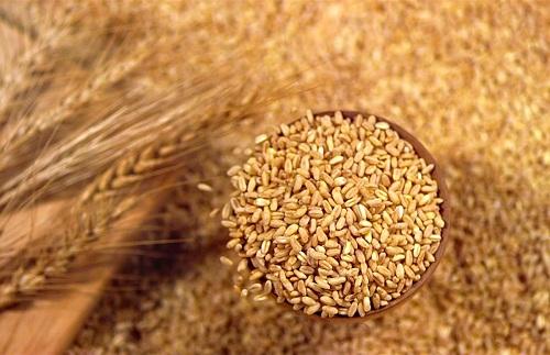 экспорт зерновой продукции