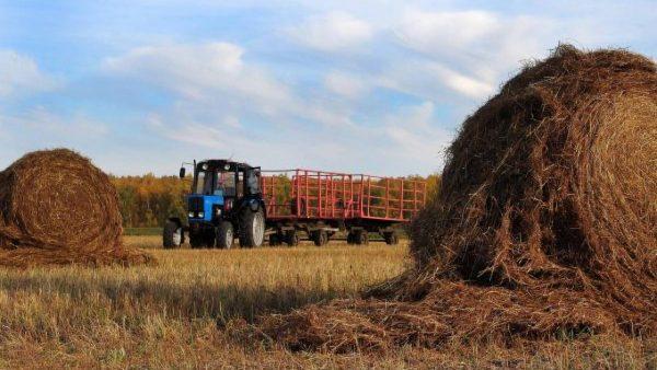В ВКО продолжается работа по созданию сельскохозяйственных кооперативов