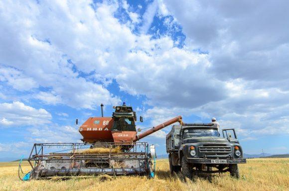 В Жетысу убрано более 70% зерновых культур