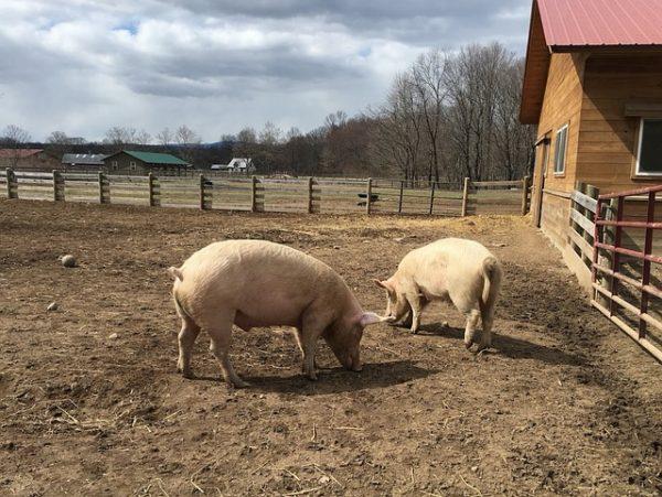 автоматический подсчёт поголовья животных на фермах