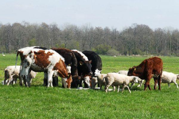 субсидирование животноводства