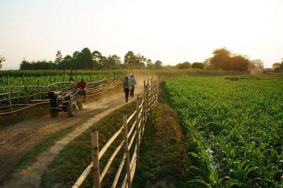В сельском хозяйстве не хватает простых рабочих