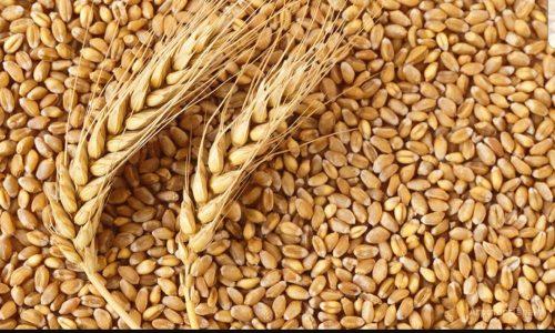 Казахстан наращивает экспорт зерна в Россию