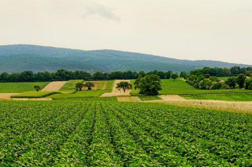 Преимущества органической фермы в биоразнообразии и прибыли зависят от местоположения