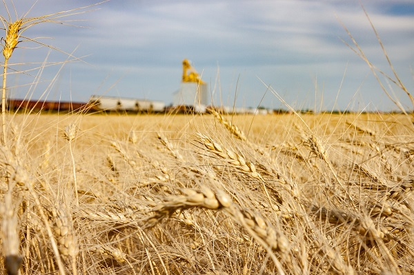 5,6 млн. тонн зерна перевезено в Казахстане с начала года