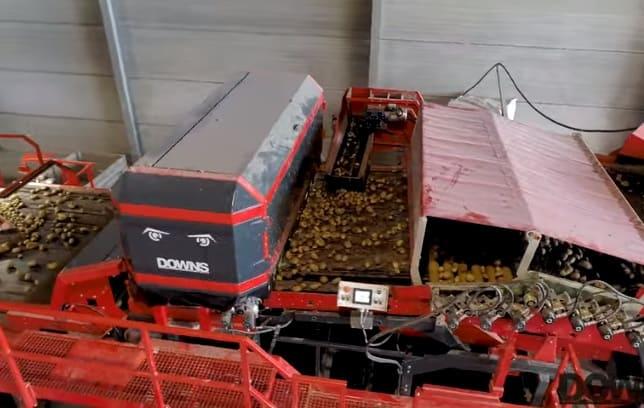 Downs CropVision оптический сортировщик картофеля