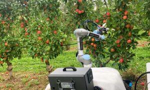 робот-сборщик фруктов