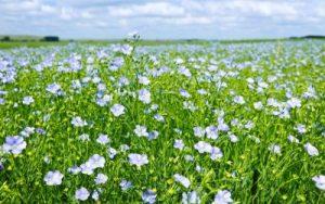В СКО значительно увеличен клин масличных