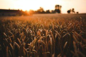 агропродовольственные системы