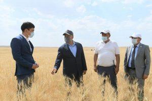 Аким области на заготовке кормов