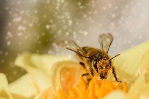 пчеловодство и сельское хозяйство