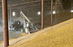 Казахстан закупил в госрезерв 350 тысяч тонн пшеницы