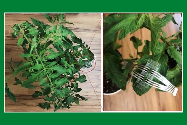 Датчик для растений