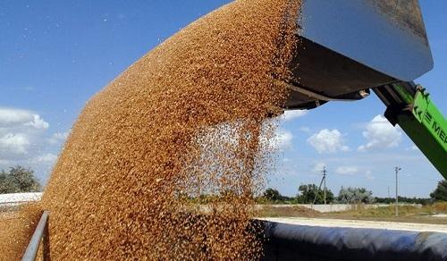 прогноз мирового производства пшеницы