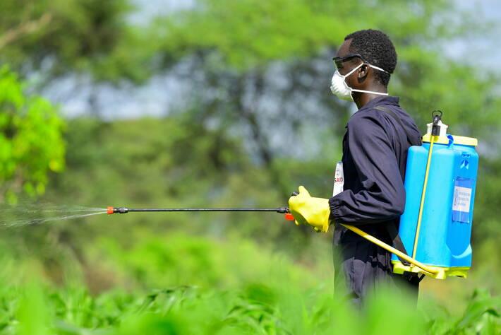 Фермер опрыскивает посевы пестицидами