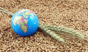 Экспорт продукции АПК из Казахстана вырос на 12,9%