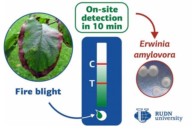 метод выявления бактериальной инфекции растений