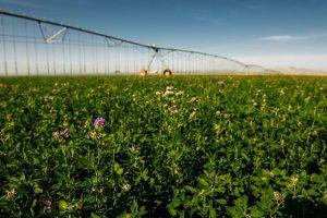 орошение сельскохозяйственный культур