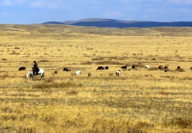 Пастбище в Казахстане