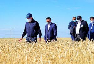 Премьер-Министр на поле пшеницы
