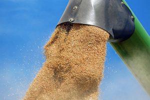 производство зерновых