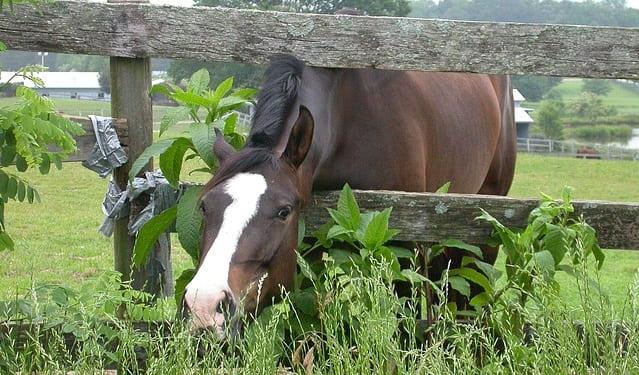 рацион лошади
