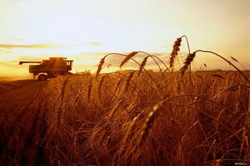 «КазАгроФинанс» передал аграриям почти 50 тысяч единиц сельхозтехники