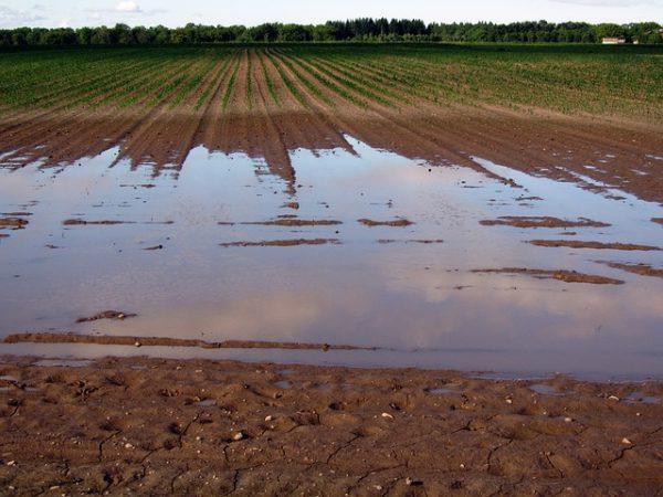наводнение на поле