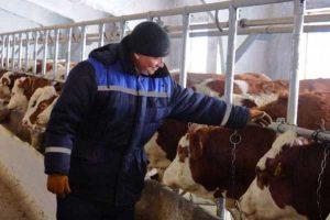 В ВКО крестьянское хозяйство оштрафовали